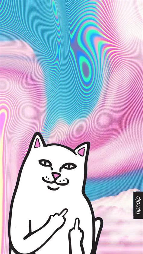 ripndip wallpaper cat rip n dip white cat w middle finger wallpaper