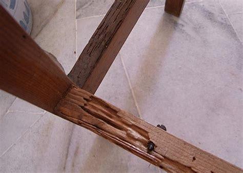 Termites In Furniture by Drywood Termite Damage Termite Web