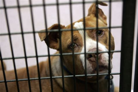 puppy store san diego san diego puppy mill caign continues the san diego union tribune