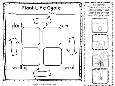 Plant Cycle Worksheet by 25 Best Ideas About Plant Cycles On Cycle Of Plants Teaching Plants And