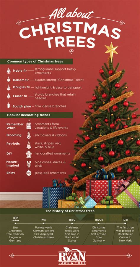 christmas tree infographic ryan lawn tree