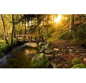 Forest Trees Creek Trail Bridge Stones Sun Rays