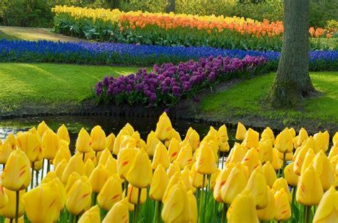 amsterdam flower garden seeing the tulips of amsterdam at keukenhof gardens the