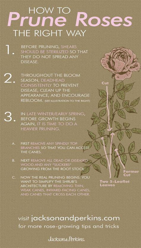best 20 roses ideas on pinterest