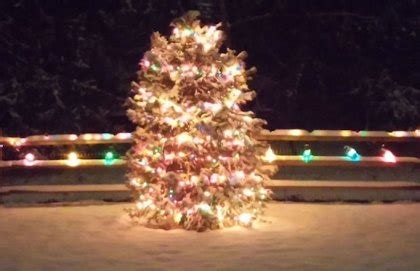 cut your own christmas tree farms in the philadelphia area