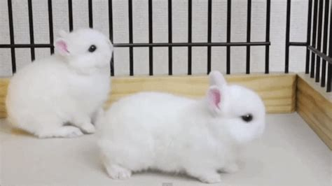 rabbit bathroom gif baby rabbit gif gifs search find make share gfycat gifs