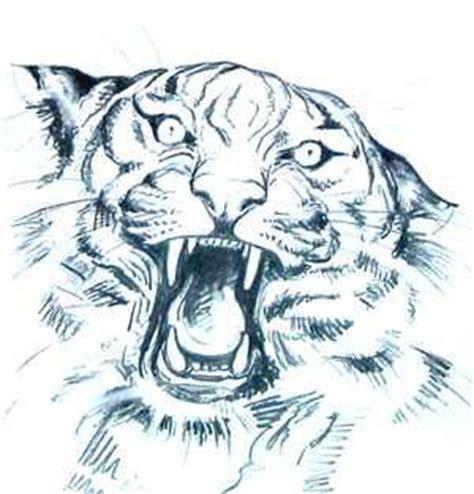 imagenes reales y imagenes virtuales c 243 mo dibujar una cara de tigre 187 tigrepedia