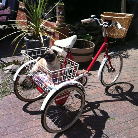 pug bike 17 best images about pashley on coming soon cycle chic and picnics