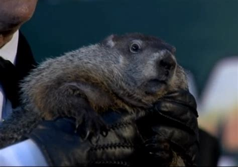 groundhog day 2015 groundhog day punxsutawney phil