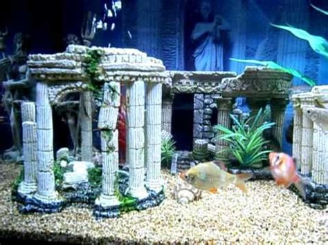 aquarium design paisley road west the gallery for gt roman themed fish tank