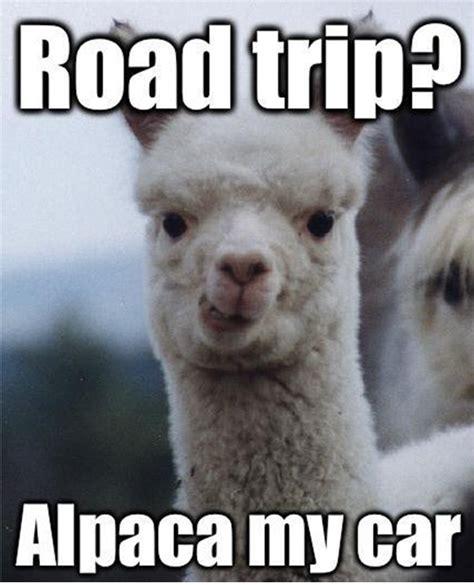 Alpaca My Bags Meme - road trips fat bottom fifties get fierce