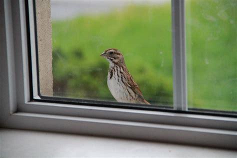 windowsill sweet bella vita