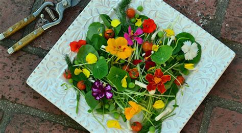 flower food recipe edible flower salad how to make a summer salad with
