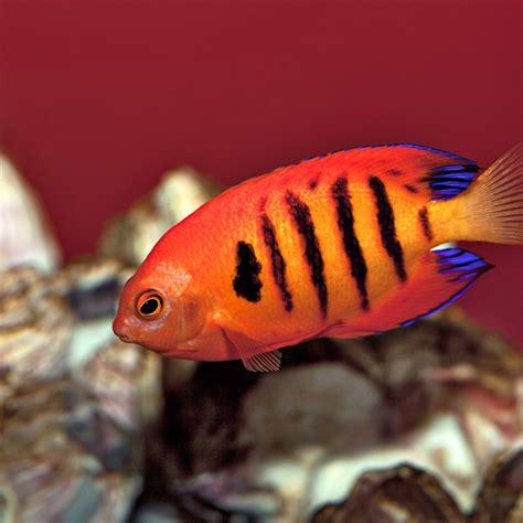aquarium design glasgow maintenance free fish tank glasgow aquarium design