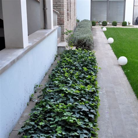tappeto erboso in rotoli prato erboso in rotoli hedera arredo giardino