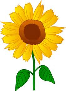 Sunflower Outline Png by Best Sunflower Clipart 26347 Clipartion
