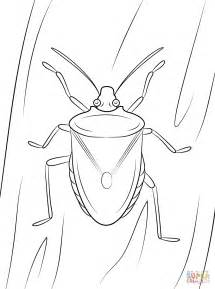 brown marmorated stink bug coloring page free printable