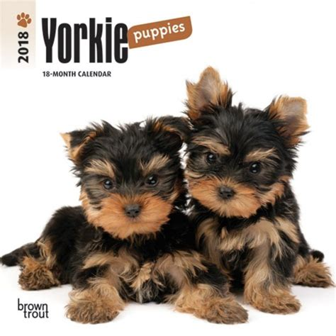 yorkie 2018 calendar books terrier puppies dogdays 2018 calendar and