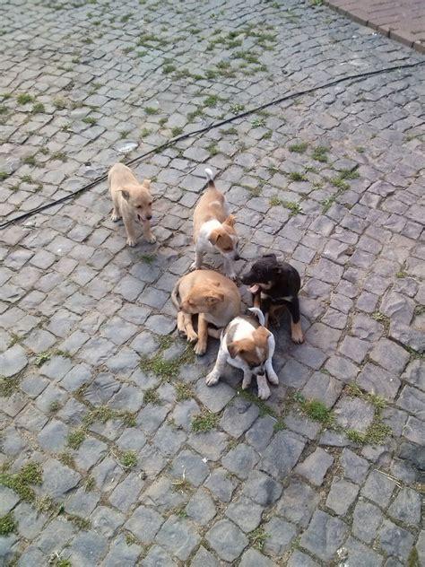 mischlinge suchen neues zuhause s 252 223 e spitz terrier mix welpen suchen ab sofort neues