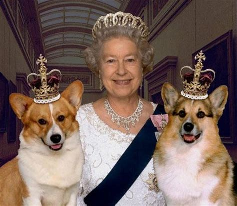 queen corgis could you knit your own royal corgi www nicespace me