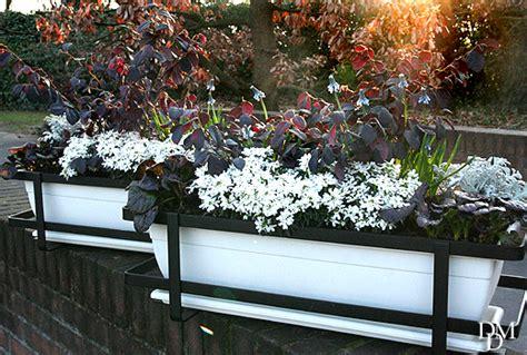 fiori invernali da vaso fiori e piante da balcone invernali piante da vaso