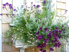 flowers for window boxes in partial shade 1000 images about shady window boxes on