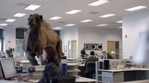 geico camel commercial hump day production library the location portal
