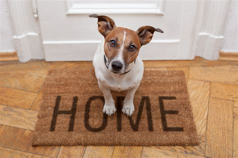 how to bell a puppy how to sell your pet friendly home