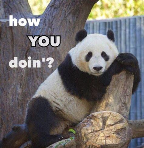 Funny Panda Memes - 17 best ideas about panda funny on pinterest panda bears