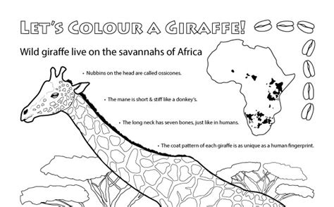giraffe habitat coloring pages all about giraffes