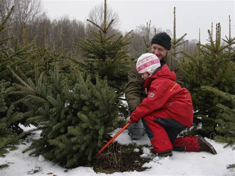 top places to buy your christmas tree and decorations