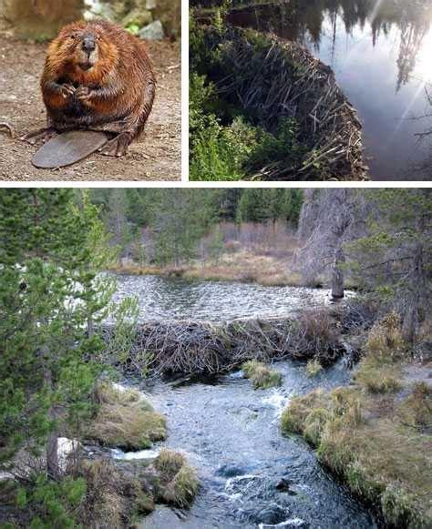 Sarang Lu 5 sarang hewan yang sangat luar biasa terselubung