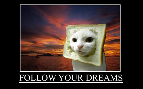 Bread Cat Meme - follow your dreams cat in bread style makes me laugh