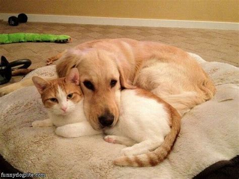 pictures of dogs and cats and cat buddies funnydogsite