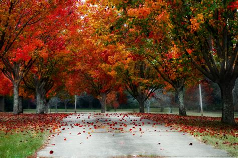 why fall is the best season reasons why fall is the best season