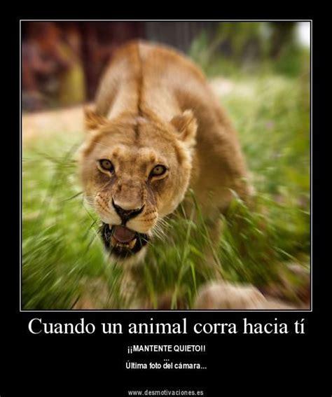 imagenes animales con frases bonitas imagenes bonitas d animales imagui