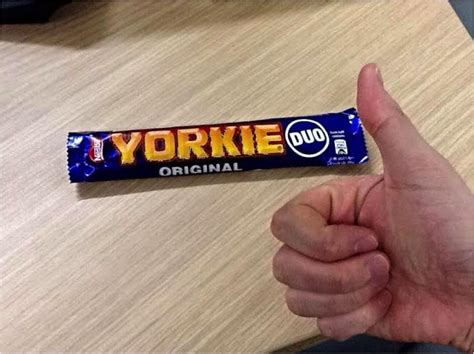 can yorkies eat ham tonka s top 8 of 2014 the ransom note
