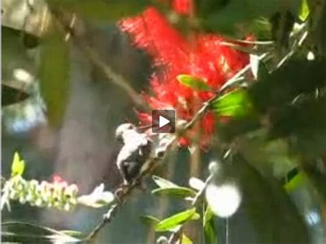 baby hummingbird rescue animal rescues pinterest