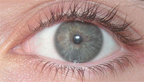 Eye Ball Images Reverse Search Eyeball Pics