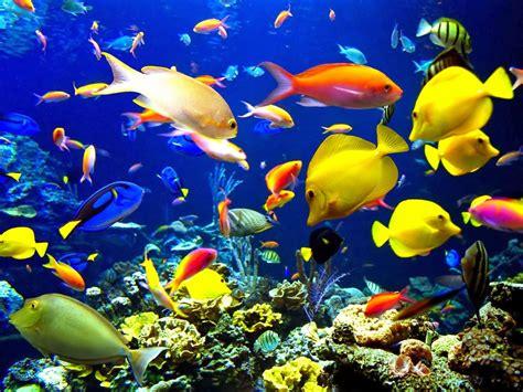 wallpaper animasi aquarium bergerak foto lucu bergerak untuk walpaper terlengkap display