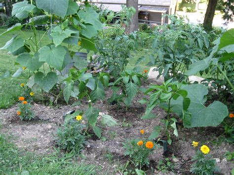 Jim Sarah Veggie Pad 2010 So Hungry I Could Blog Types Of Vegetable Gardens