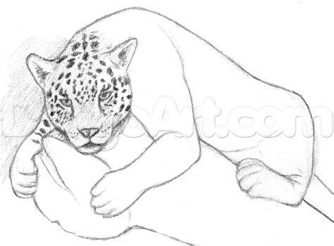 how to make a jaguar how to draw a jaguar step by step rainforest animals