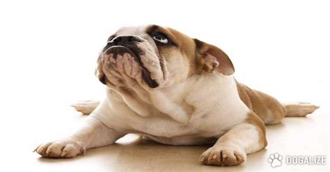 rapamycin dogs the rapamycin a that can extend the of dogs dogalize