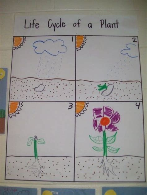biography lesson plan for 2nd grade plant life cycle plant life cycle lesson plans second grade 10 ready to