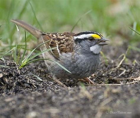 northwest ohio birds nature above below beyond