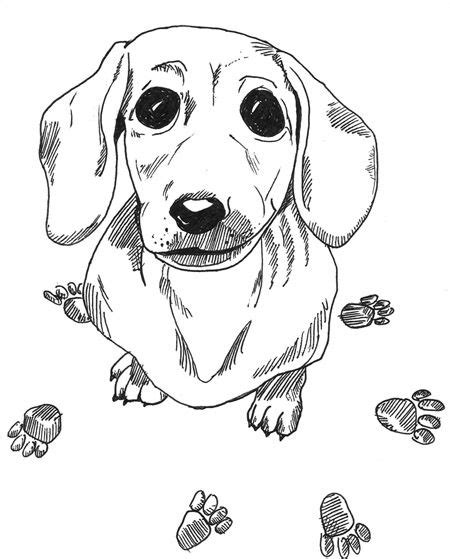dachshund puppies coloring pages dachshund printable coloring pages doxie heaven