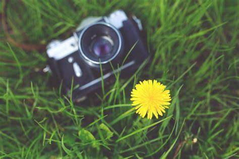 camara foto antigua c 225 mara antigua en la hierba descargar fotos gratis