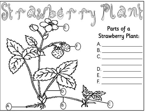 parts the plant coloring pages