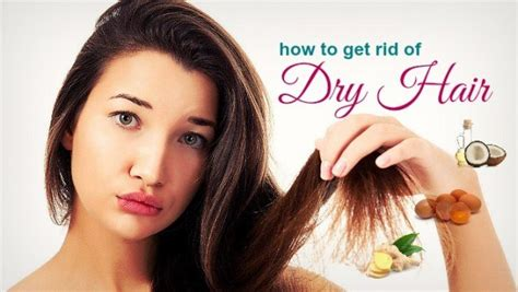 getting rid of dog hair in the house how to get rid of hair in the house 28 images how to get rid of orange hair should