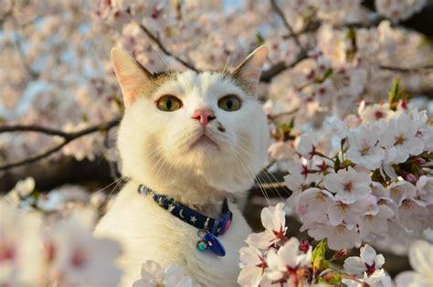 Daftar Sho Kucing 50 kucing cantik di bawah indahnya pohon